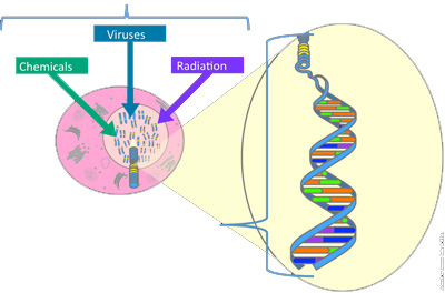 The causes of mutations