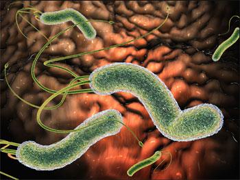Helicobacter pylori h pylori