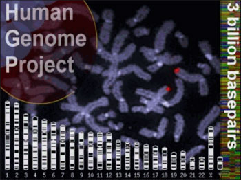the human genome project a utopian society A utopian society could never exist because man is made  other desired characteristics with regards to the human genome project scientists have had.
