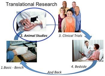 translational studies Centre for translation studies  find out more about our research activity which focuses on specialisms such as translation theory, metaphor in translation,.
